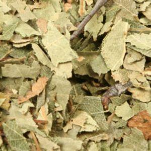 Baldwins Birch Leaves ( Betula Alba )
