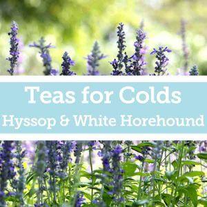 Baldwins Remedy Creator - Teas for Colds - White Horehound & Hyssop
