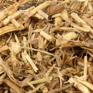 Baldwins Couch Grass (dog Grass) ( Agropyron Repens )