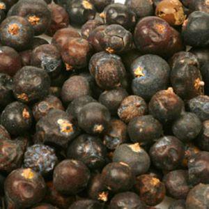 Baldwins Juniper Berries ( Juniperus communis )