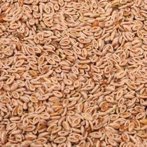 Baldwins Psyllium Seeds Blonde ( Plantago Ovata )