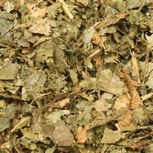 Baldwins Witchazel ( Hamamelis virginiana ) Leaves