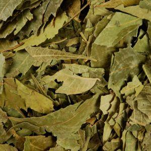 Baldwins Neem Leaves ( Azadirachta indica )
