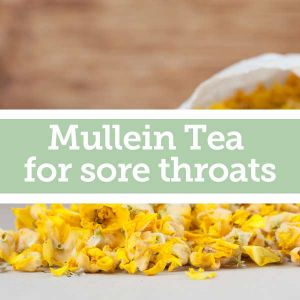 Baldwins Remedy Creator - Mullein Tea for Sore Throats
