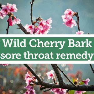 Baldwins Remedy Creator - Wild Cherry Bark Sore Throat Remedy
