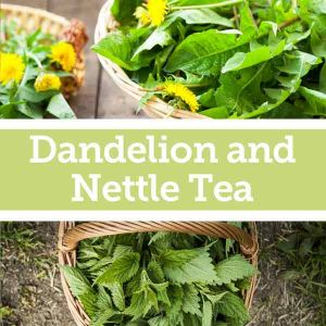 Baldwins Remedy Creator - Dandelion & Nettle Tea for Nervous Exhaustion