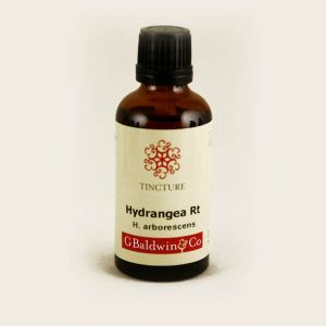 Baldwins Hydrangea ( Hydrangea Arborescens ) Herbal Tincture