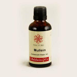 Baldwins Mullein ( Verbascum Thapsus ) Herbal Tincture