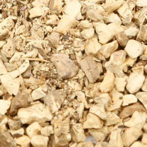 Baldwins Stone Root (collinsonia) (collinsonia Canadensis)