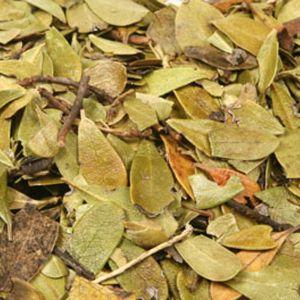 Baldwins Uva Ursi Herb ( Arctostaphylos Uva Ursi )