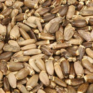 Baldwins Milkthistle Seed ( Silybum Marianum )