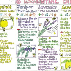 Essential Oils Chart