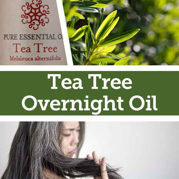Tea Tree Dry Hair Remedy