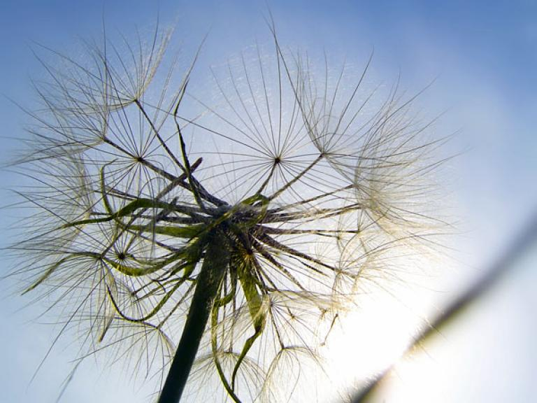 Hay Fever Helpers - Natural Remedies For The Hay Fever Sufferer.