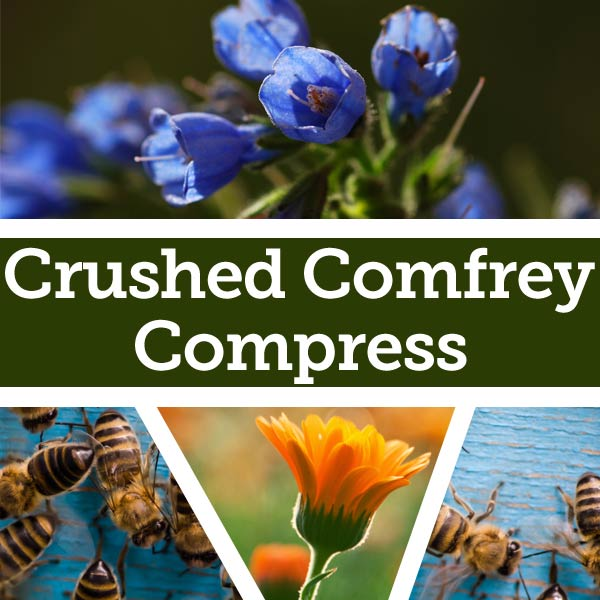 Comfrey Flowers and Bees