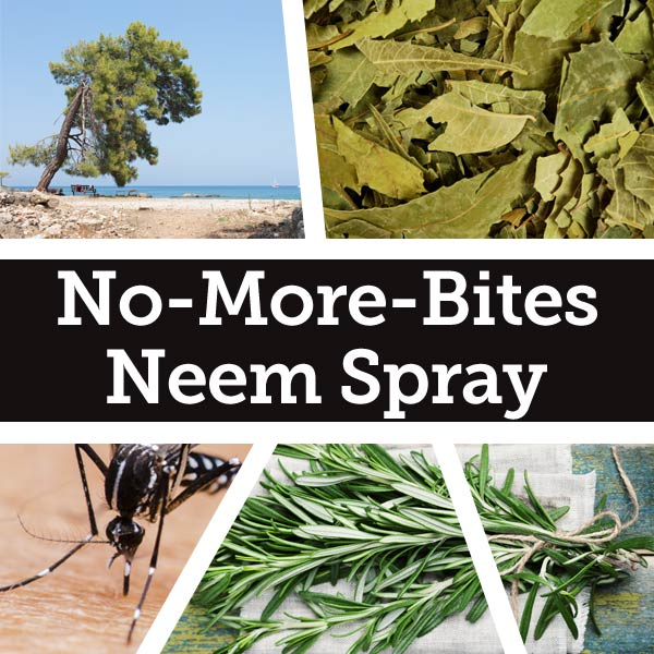Neem Leaves and Mosquitoes